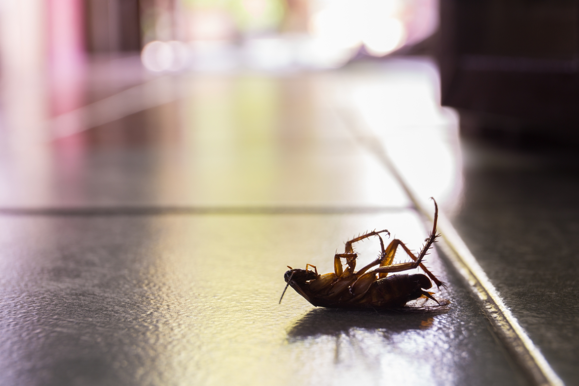 Cockroach Control, Pest Control in Manor Park, E12. Call Now 020 8166 9746